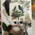 bird-nest-card