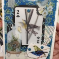 blue-jay-card